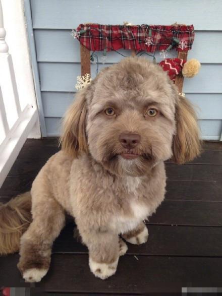 长得像人的狗不稀奇,长得像明星的狗才厉害!