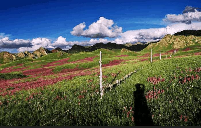 都兰县海寺花海景区