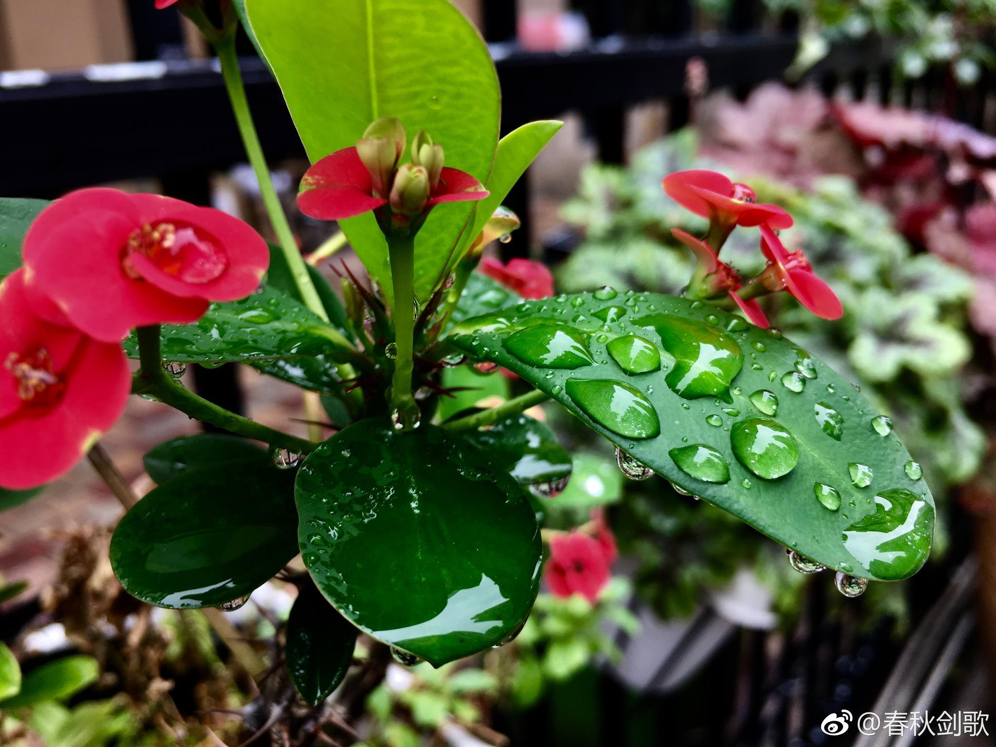 听雨,赏花。_新浪看点(引用:春秋剑歌) - 咱当兵的人 - 朋友多了路好走,有缘是朋友。