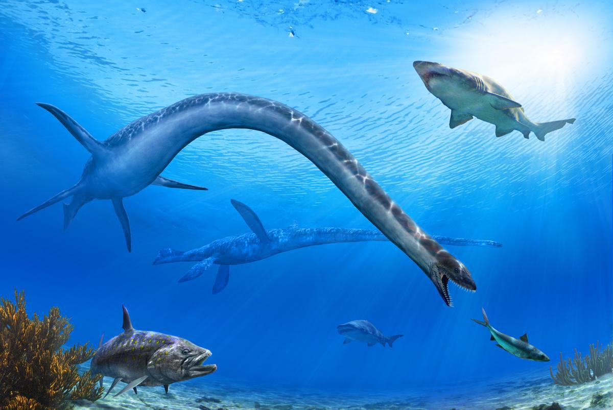 身体最奇怪的5种史前动物,图2是有腿的鲸鱼,图3的牙齿
