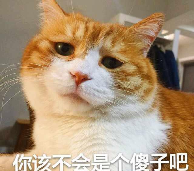 小仙女专用表情包,可爱猫咪图片