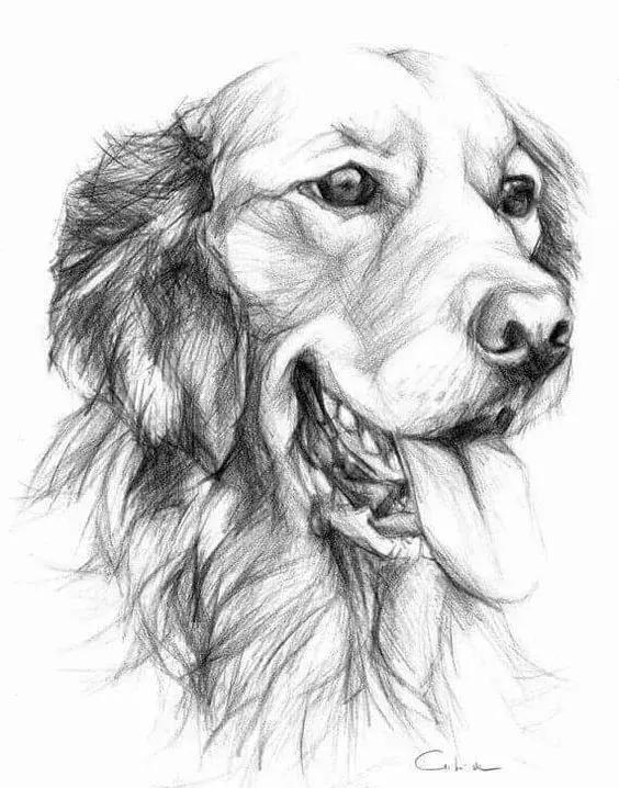 素描,油画狗狗各种姿态的表现方法