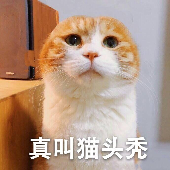 喵星人表情264:(猫日哆啦)真叫猫头秃!OK!说梦表情堆猫咪包a糖图片