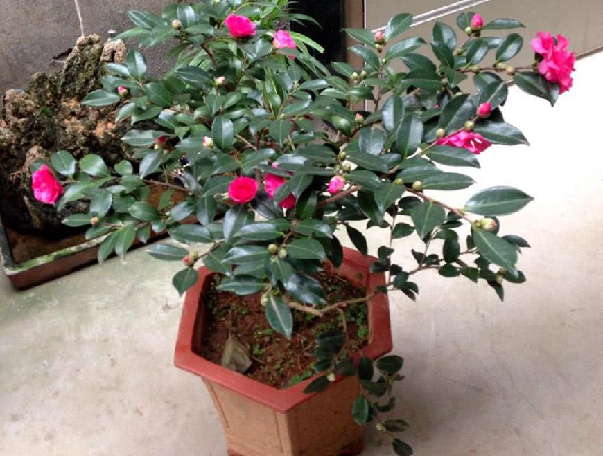 适合家养的花卉,美观还好养活,快看看你家的上榜了吗?