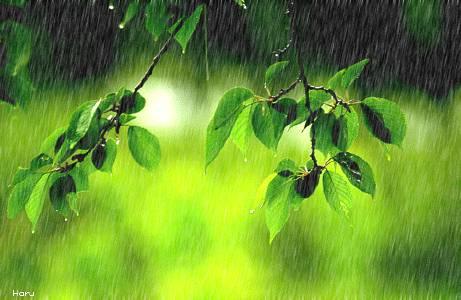 《春 雨》山林子自然道德智慧诗