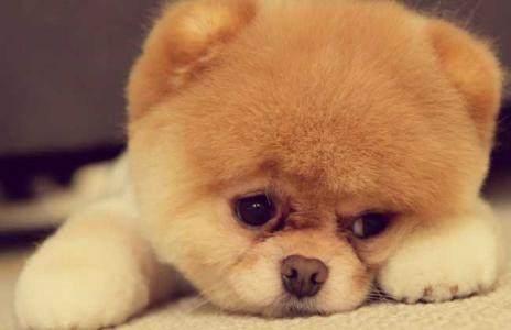 十二星座专属宠物狗狗,快来看看你是专属哪一种宠物狗狗吧!