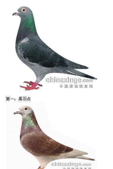 图片鸽鸽子鸟图片379_567竖版竖屏鸟类动物手工v图片蝴蝶图片
