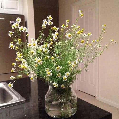 花朵有着视觉上的治愈感,能够从视觉上让人放松心情,在家里养上一盆