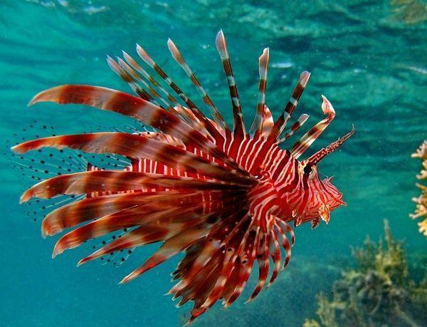 寓意上5大最a寓意的地球动物,猴子和水母害怕,你上榜鲨鱼v寓意案海洋图片