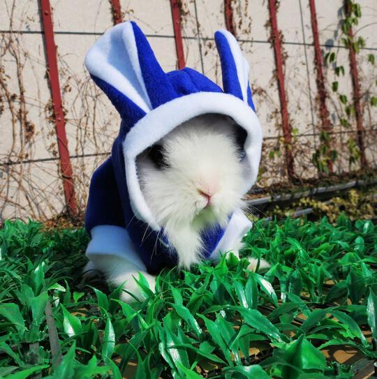 动物壁纸狗狗狗苍蝇540_543兔子药闻了鼻子特别痒图片