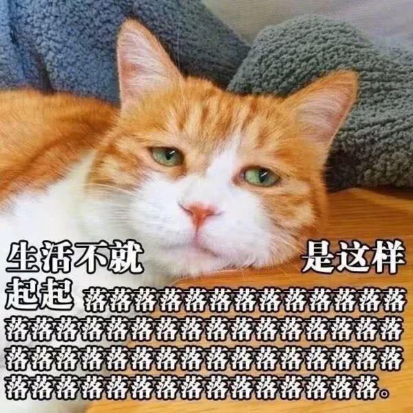 猫咪版心灵鸡汤,不,应该是心灵猫汤