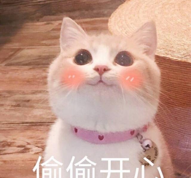 爱撸猫的看过来,送一波超可爱的猫咪表情!微信很好的表情图图片