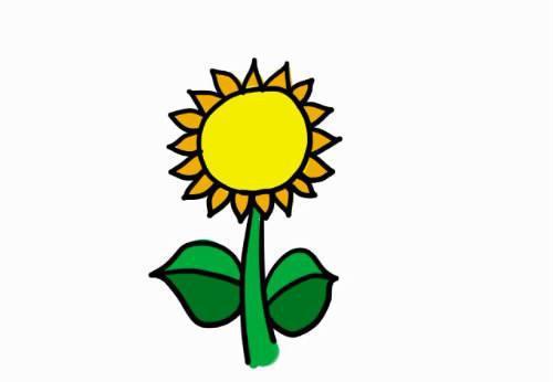 跟我一起画 简笔画 第38期 跟着太阳转动的向日葵图片