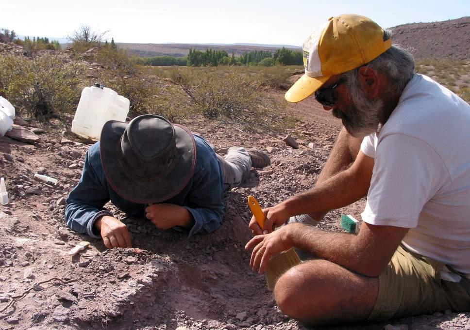 厉害了!阿根廷首都发现巨型恐龙化石,骨架上长满锋利的尖刺!
