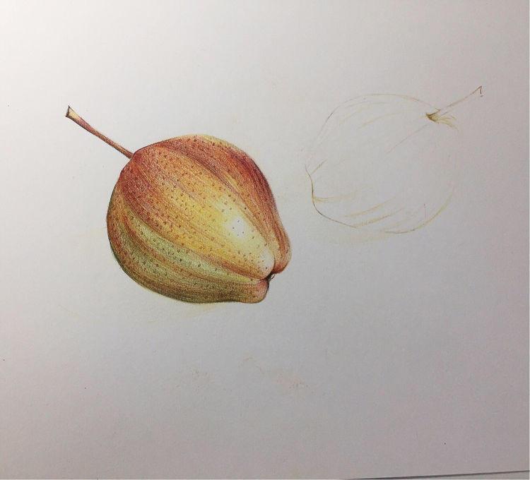 彩虹梨彩铅手绘教程