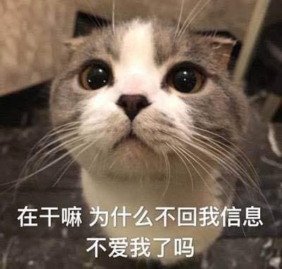 搞笑的猫咪表情包31张,拿去折腾男朋友吧图片