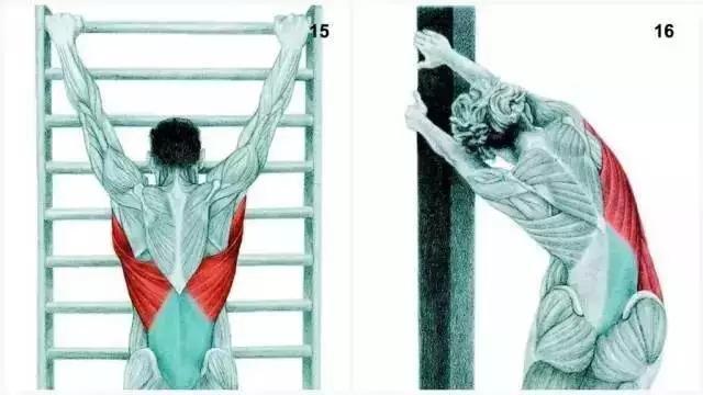 15、闊背肌伸展脊柱牽引