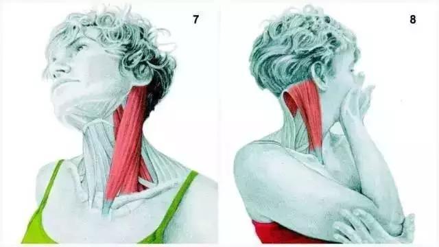 7、頸部側曲