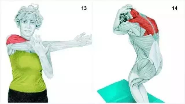 13、橫向肩部伸展