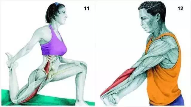 11、髖屈肌伸展