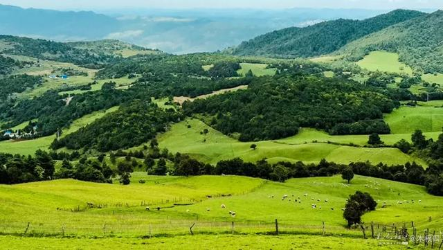充满美丽传说的寻甸凤龙山 那一片有厚度的大草地的确漂亮