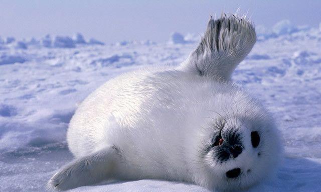 """世界上""""十大""""最可爱的动物, 看了绝对不会后悔!"""