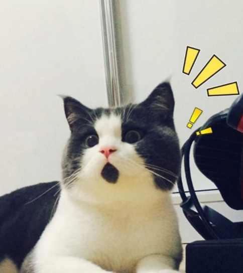 天生一副吃惊表情, 这只猫咪比小岳岳更萌更可爱!图片