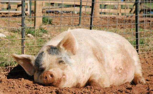受不了的图片搞笑_看动物搞笑的表情,总会不自觉的想到点什么