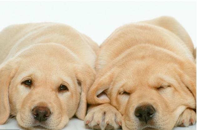 在家里养只宠物是什么感觉?很多宠物爱好者,月收入早就过万了