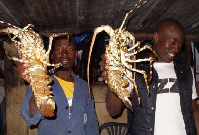 非洲大龙虾比白菜便宜, 非洲人拿虫子当饭吃, 不敢吃龙虾!图片
