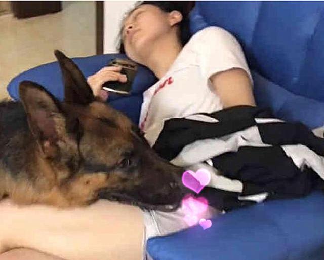 趁女主人熟睡后,狗狗做出这样的事,男主人看后自愧不如图片