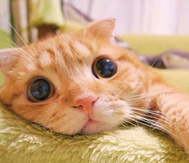 不要再散发魅力啦,你这只迷死人的小猫咪图片