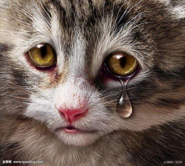 流泪在动物身上往往是目的性的,清洁眼球,排出异物或者外来的刺激(如