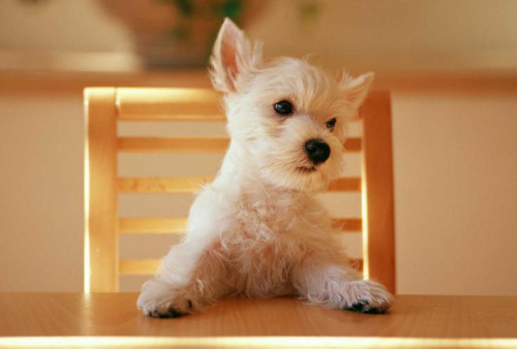 小柴犬这趴着的小姿势简直太可爱了,居然是在等主人洗澡
