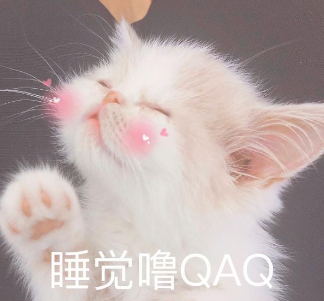 搞笑表情裤子:生不肯恋又无可去死的表情表情女朋友逗猫咪包脱图片