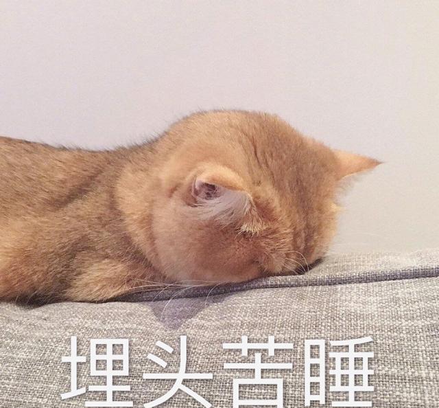 搞笑猫咪表情:生不肯恋又无可去死的表情恶搞表情包系列的图片