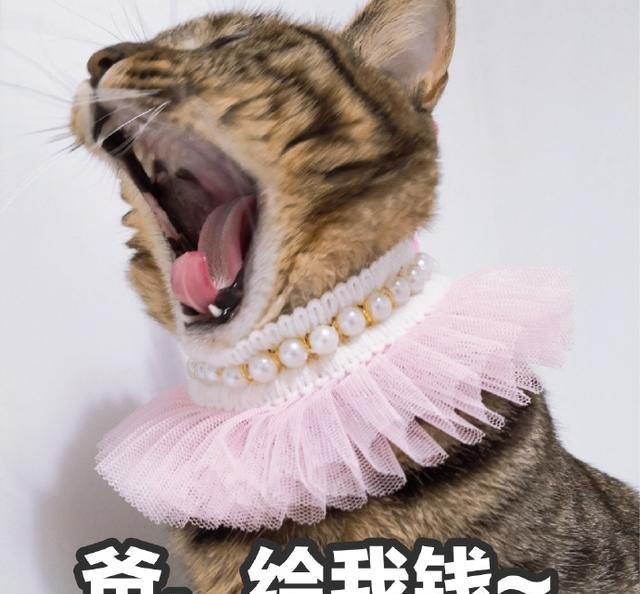 搞笑表情猫咪:生不肯恋又无可去死的表情卷福gif表情包图片