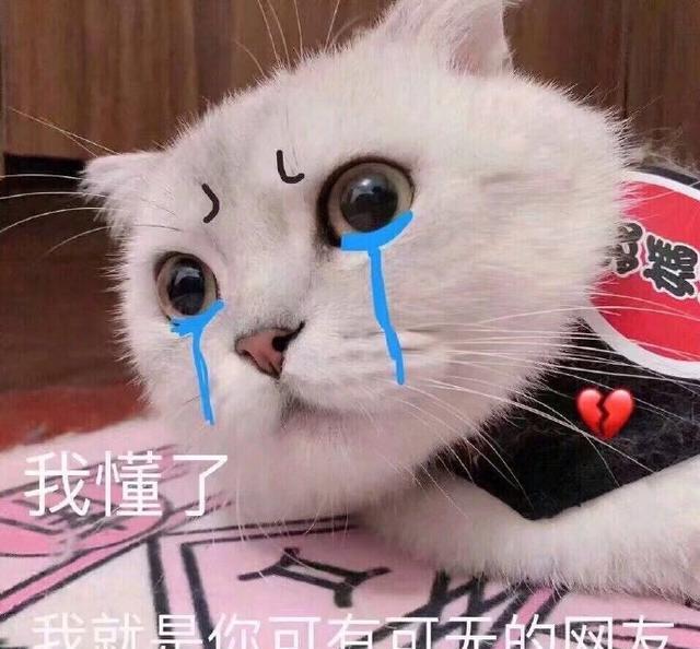 搞笑表情表情:生不肯恋又无可去死的猫咪做v表情表情包图片