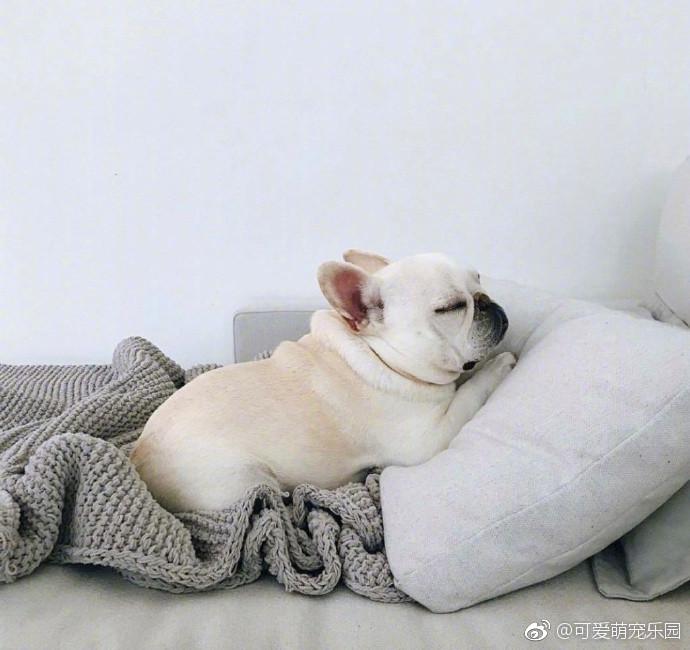 躺/�ij�{��j8�Nh@_可爱小法斗,我就静静躺在这里等主人回家!_新浪看点