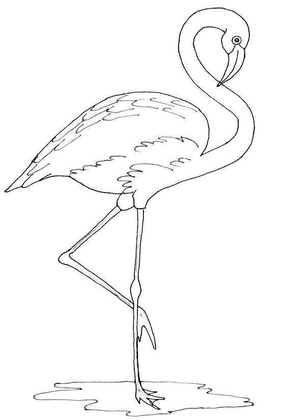 火烈鸟高清手绘线稿,临摹学习