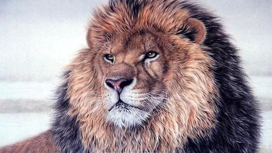 藏獒vs狮子_狮子单挑藏獒可以做到秒杀,那一头雄狮能够对付8只藏獒吗?
