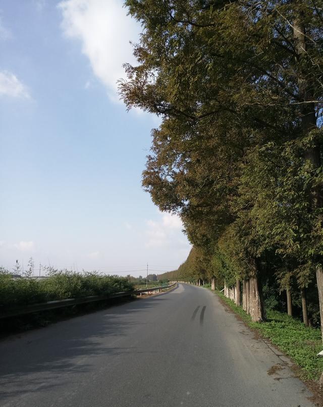 浦东环滴水湖骑行,偶遇美丽的塘下公路,几乎美呆了
