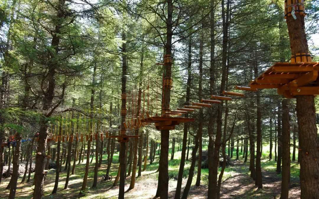超好玩的丛林穿越即将亮相翠云山森林风景区露营节!图片