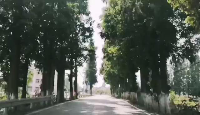 小龙虾季试驾东风风光580智联型  ?