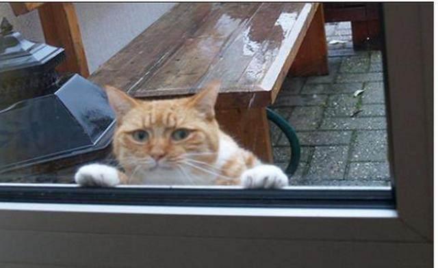 橘猫犯错被关在门外,歇斯底里求原谅,小表情都快把人萌翻了图片