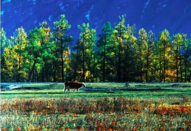 新疆最美风景排行榜,看到第一个我就走不动路了!图片