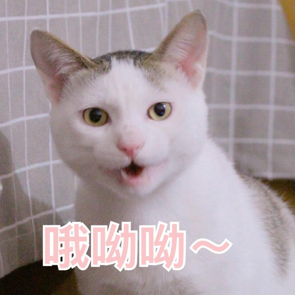 表情月球281:小崽子落我手里了吧?来呀…气猫咪搞笑图图片