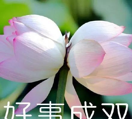 超级流行1的【佛系莲花】表情有qq的空间图片搞笑图片字适合图片