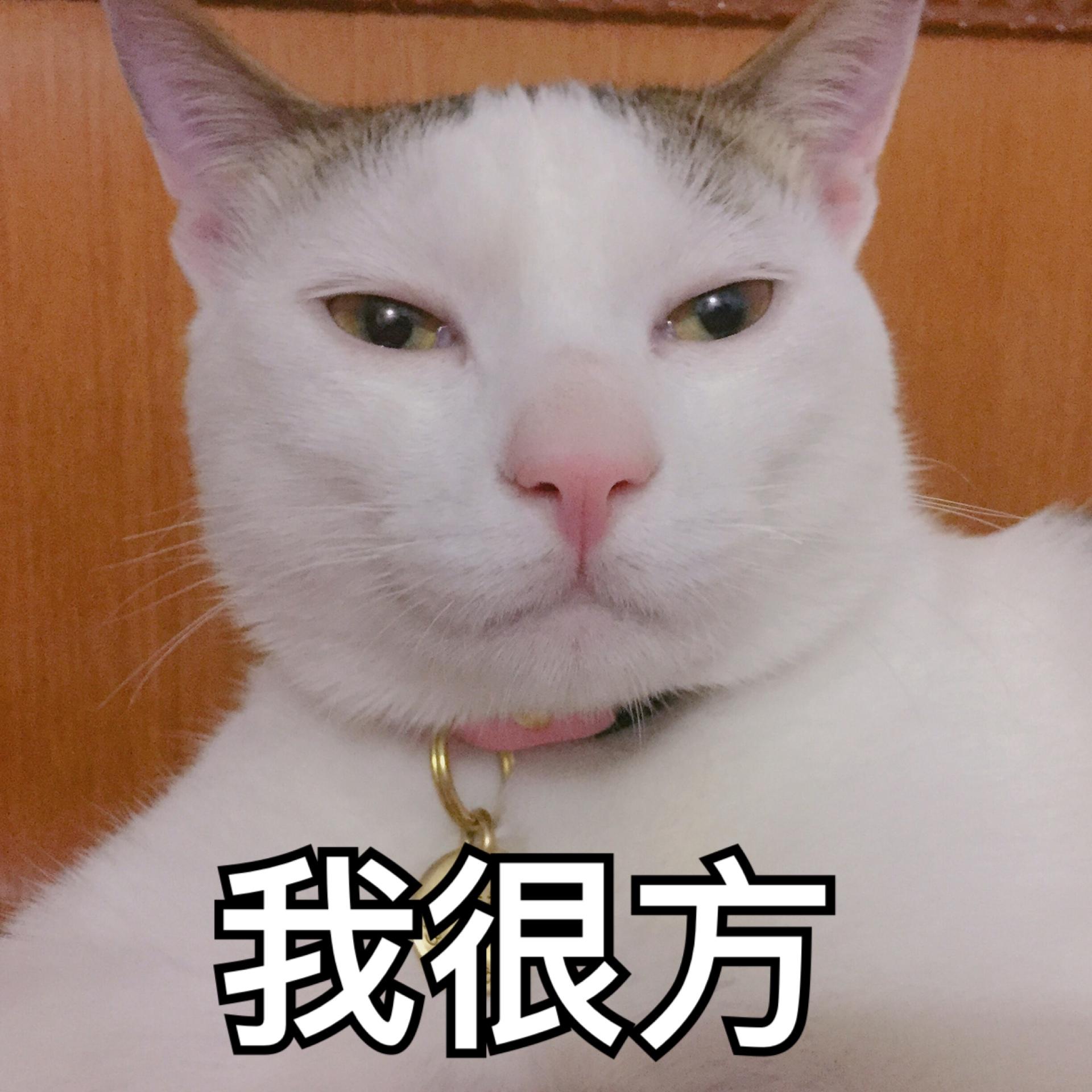 图片表情281:小崽子落我手里了吧?来呀…气猫咪包搞钱只想表情图片