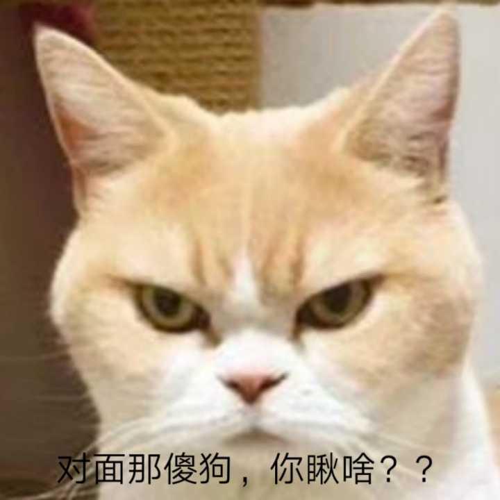 猫咪表情包293(>9p):对面的傻狗,你瞅啥?瞅你咋滴
